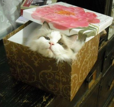 cat in the box shrunk