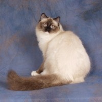 SEAL MITTED