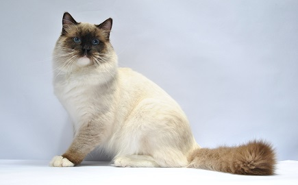 pattern mitted